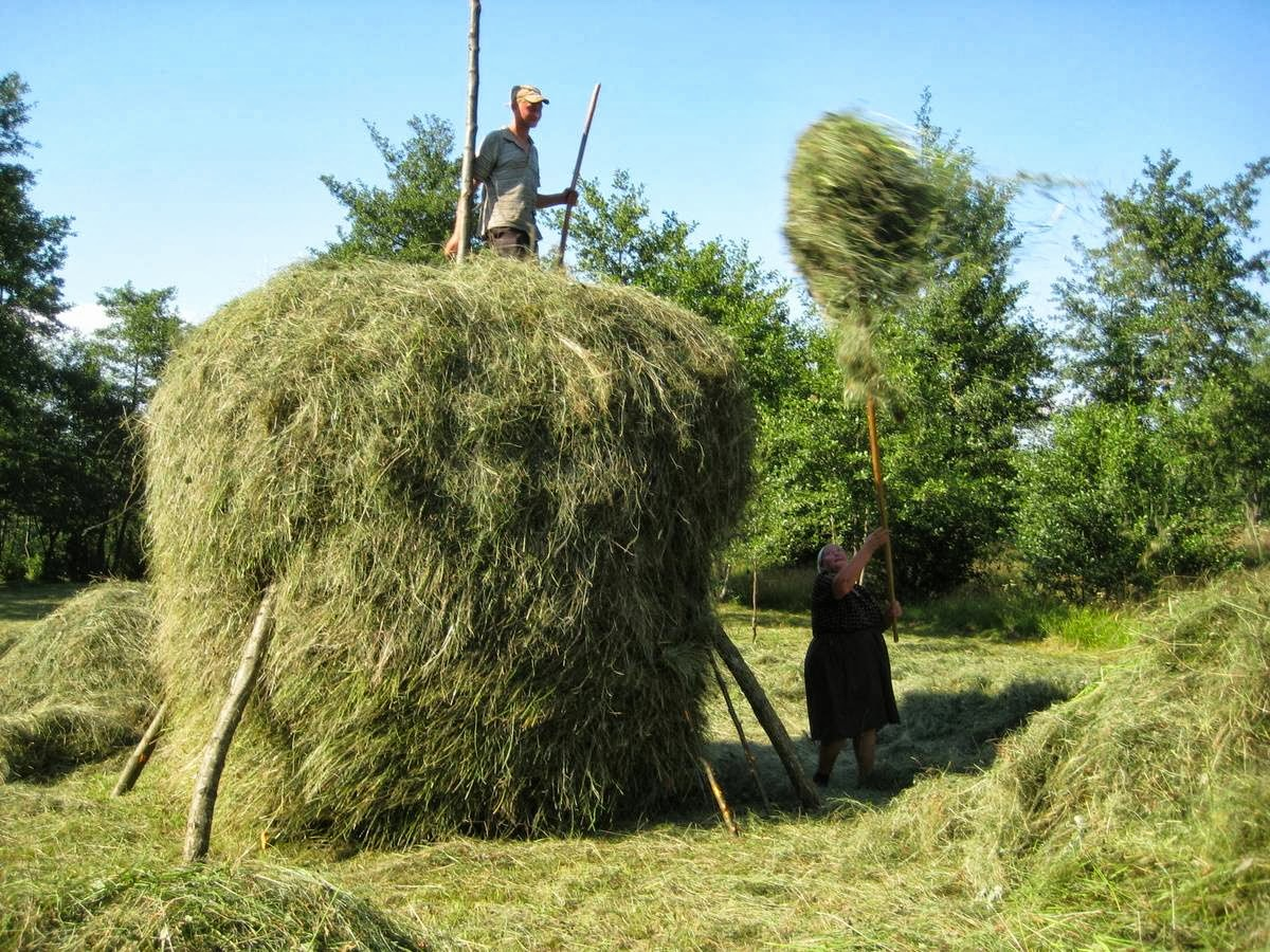 romanian-haystack